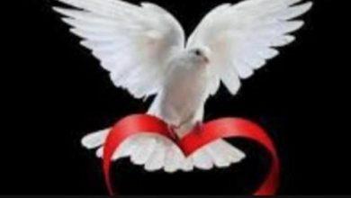 صورة التكتل الوطني للسلام يدين الحادث الإجرامي في مطار عدن