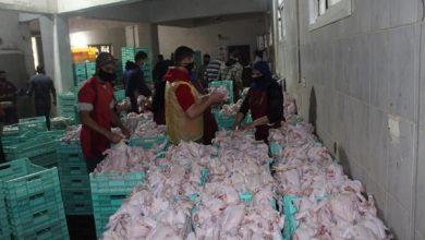 صورة ضبط 130 كيلو من اللحوم و19 كيلو أسماك منتهية الصلاحية بحي العامرية بالإسكندرية