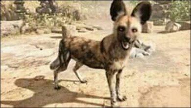 صورة هي مخلوق غامض …تعرف على الحيوان الذي أحدث الرعب فى قلوب الأهالي