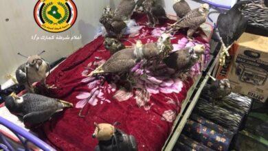 صورة العراق: شرطة كمارك تلقي القبض على (لنجة) على متنها ٣ متهمين يحاولون تهريب ١٥ صقرا و٣ طيور حباري