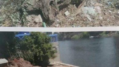 """صورة الجيزة"""" توضح حقائق ازالة عدد منش اشجار الكافور المتهالكة بشارع النيل"""