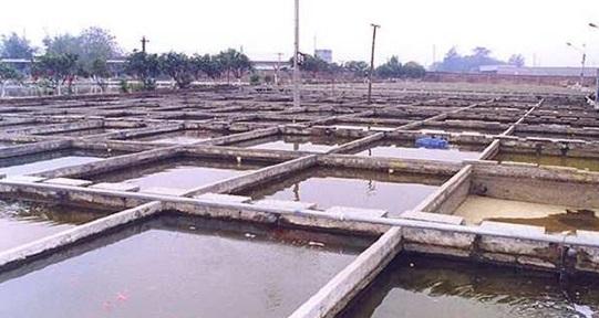 صورة الوزراء يوافق على إعادة التأجير وجدولة المديونيات وإعادة النظر فى القيمة الإيجاريه للمزارع السمكي
