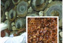 صورة باعتباره رافد محوري لتنويع الاقتصاد .. انطلاق فعاليات سوق العسل العُماني الـ15
