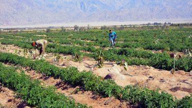 صورة فودة يتفقد إحدى المزارع لإنتاج الخضر والفاكهة في إطار تحويل الطور لسلة غذاء المحافظة