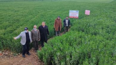 صورة الزراعة تواصل جولاتها الميدانية للاطمئنان على محصولى القمح والفول البلدي