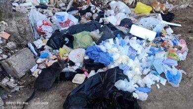 صورة بالصور .. كارثة بيئية تهدد اهالي زفتي … القمامة والنفايات الطبية تحاصر أكبر الشوارع الرئيسية